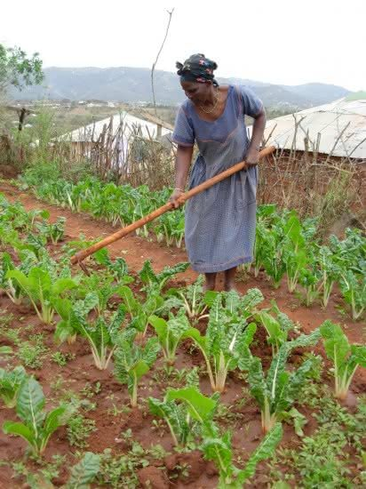 Agricultura-na-africa-1